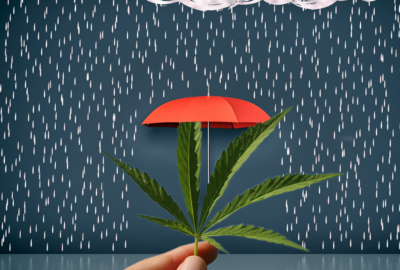 What is Cannabis Insurance?