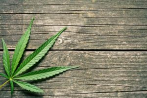 Do you need cannabis general liability insurance?
